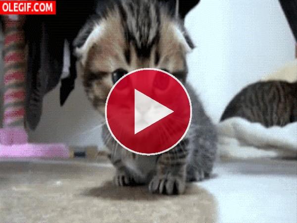 GIF: Este gatito tiene sueño
