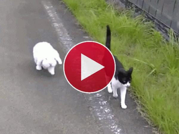 GIF: Caminando juntos