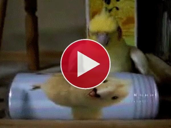 Este pájaro se ha vuelto loco