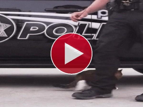 GIF: Este gato policía quiere ser libre