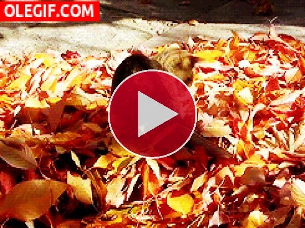 Este gato juega entre las hojas otoñales