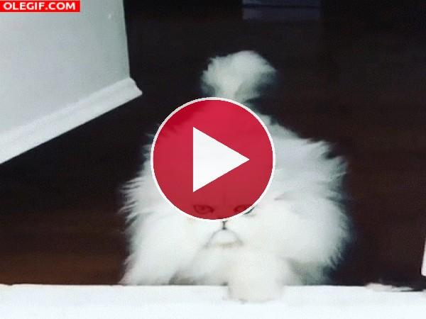 Un bonito gato se acerca