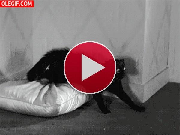GIF: Este gato está enojado