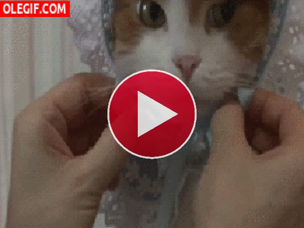 A este gato le han puesto un gorrito