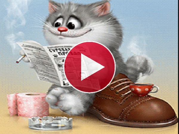 GIF: Un gato humanizado