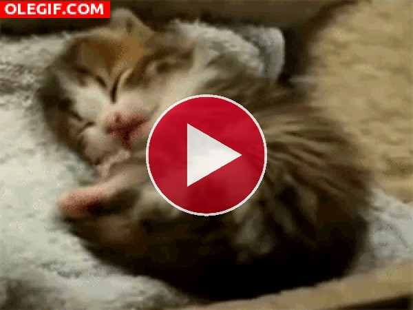 GIF: Mira cómo bosteza el gatito