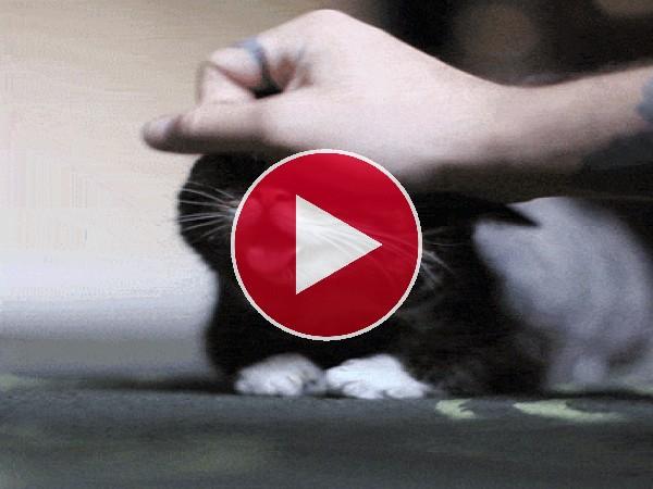 La cara chistosa de un gato