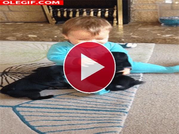 Bebé jugando con dos cachorros