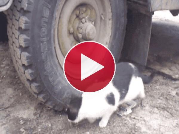 Gato buscando cobijo