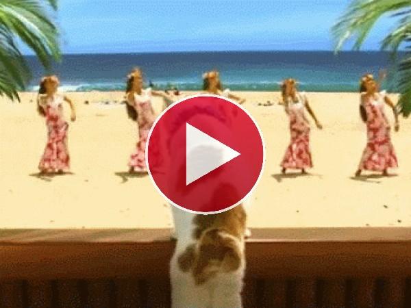 GIF: Un gato en Hawái