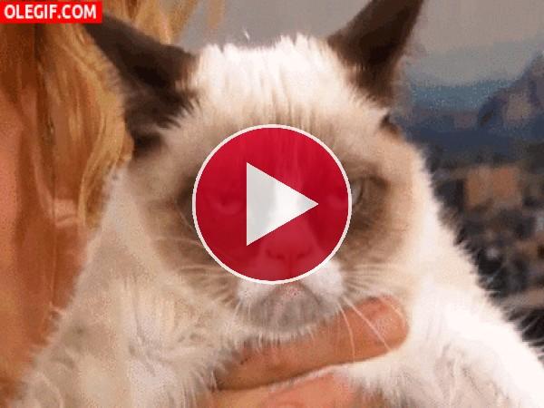 GIF: Este gato está enfadado