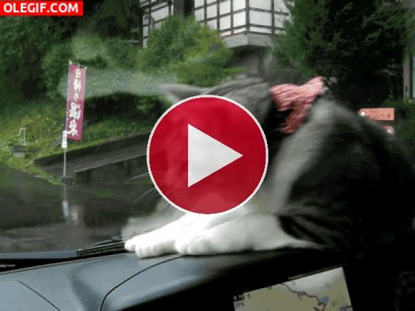 GIF: Gato jugando con el limpiaparabrisas