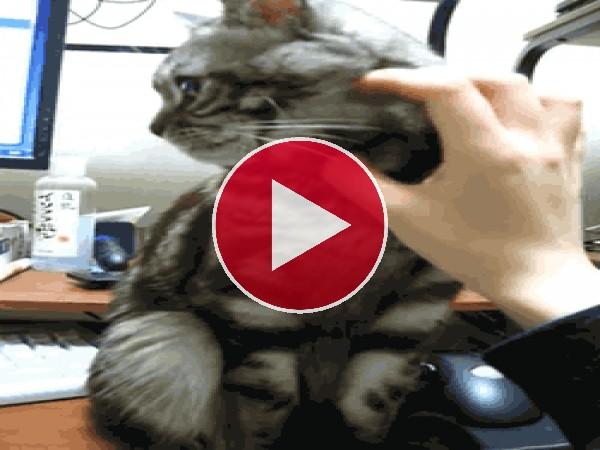 GIF: Este gato no quiere que le acaricien