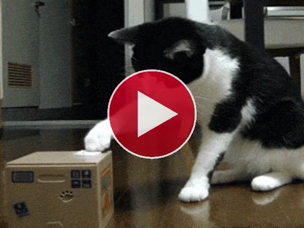 GIF: Un gato sorprendido