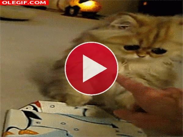 Un gatito con enormes ojos