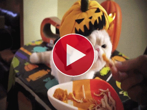 Mira cómo come este gato en Halloween
