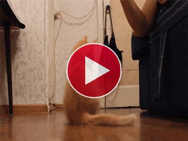 GIF: Mira cómo se cae este gato