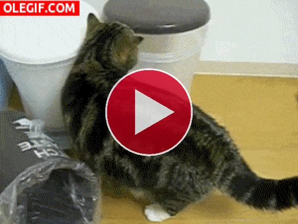 GIF: Este gato es feliz dentro del cubo