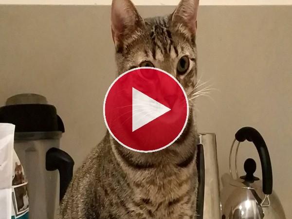 Un gato en la cocina