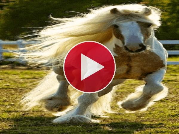 GIF: Unos lindos caballos