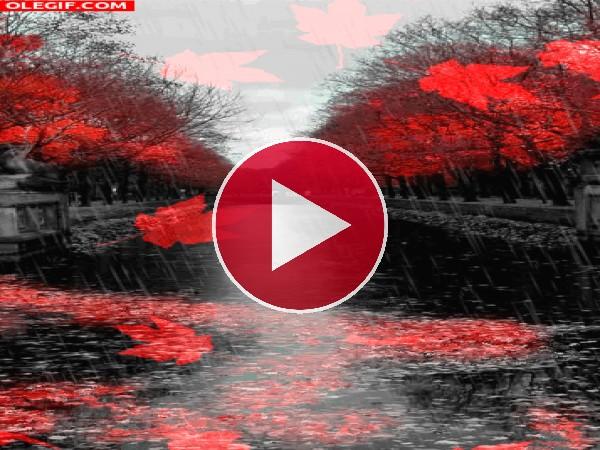 GIF: Lluvia y hojas cayendo en otoño