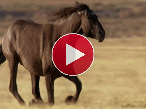 GIF: Cómo galopa este caballo