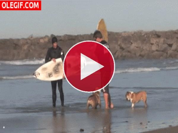 Mira a este perro surfista