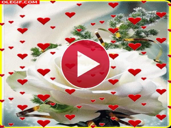 GIF: Rosa para enamorar