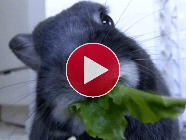 GIF: A este conejo le gusta la lechuga