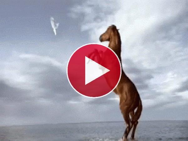 GIF: Caballo y paloma corriendo juntos