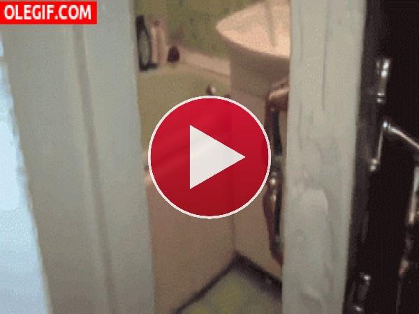 GIF: Este gato quiere intimidad