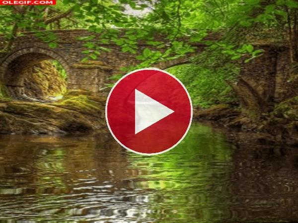 Río bajo un puente
