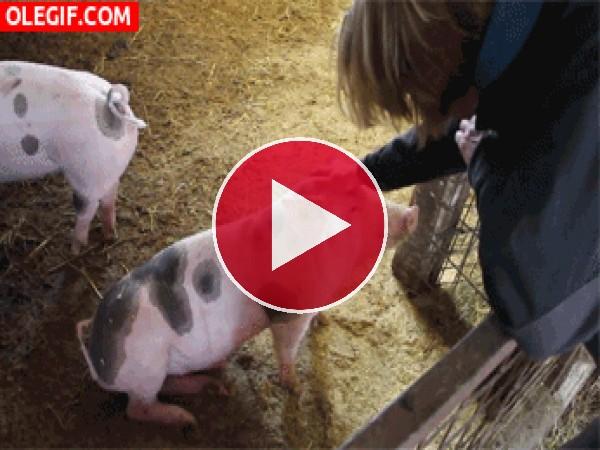 GIF: Durmiendo al cerdo