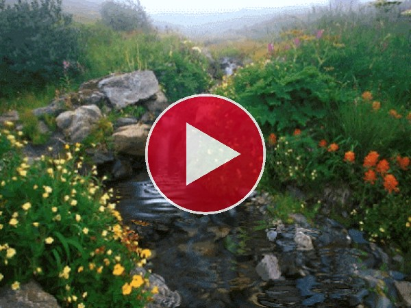 GIF: Flores a orillas del riachuelo