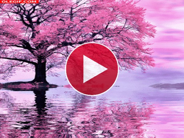 GIF: Árbol en flor junto al agua