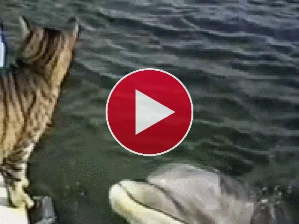 GIF: Amistad entre un gato y un delfín
