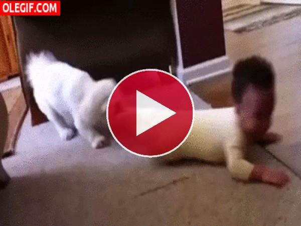 Este bebé es arrastrado por el perro