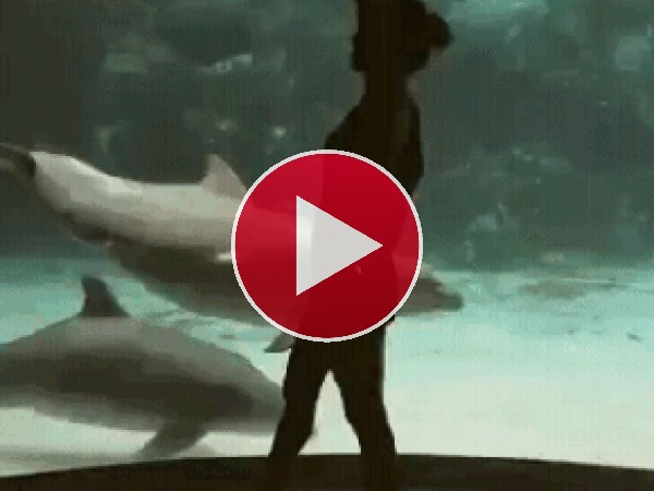 GIF: Danzando junto a los delfines