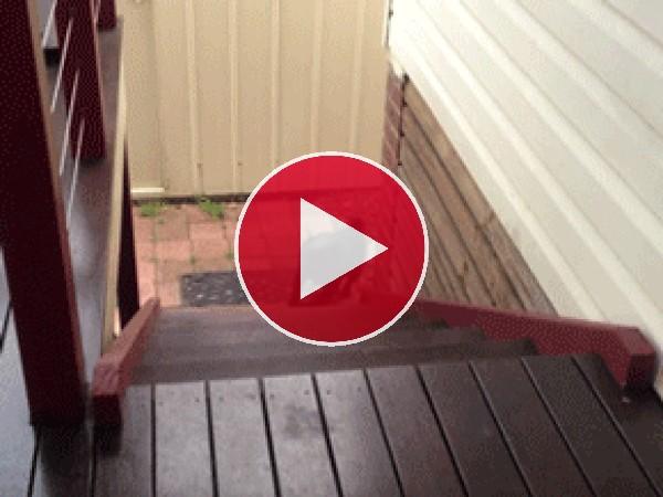 Mira cómo sube las escaleras el perro