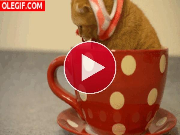 Mira a este gatito dentro de la taza