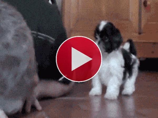 GIF: Jugando con mi cachorro