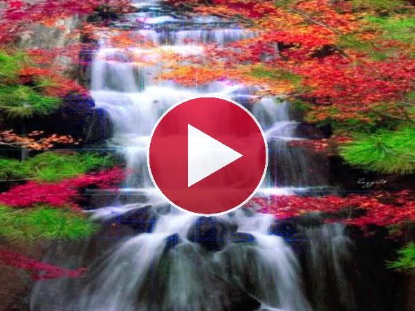 GIF: Una hermosa cascada