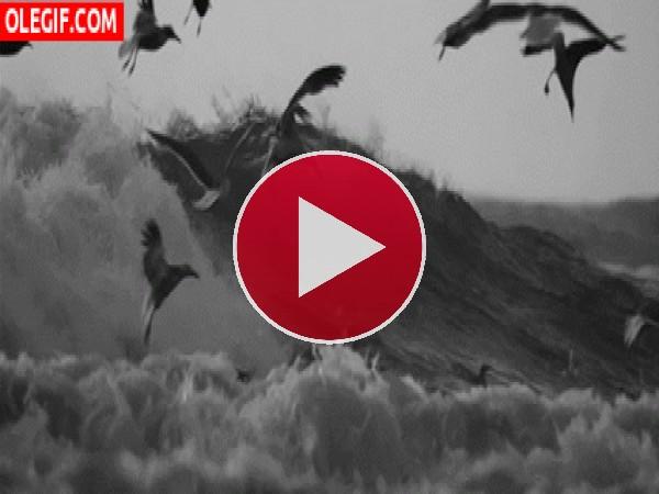 Gaviotas volando entre las olas
