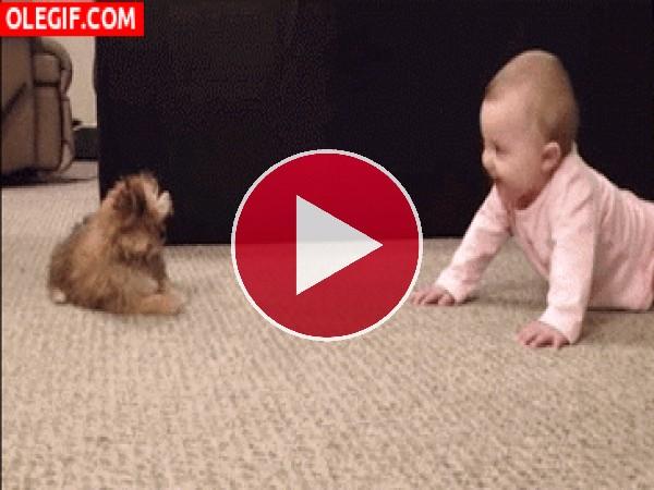 Este bebé se parte de risa con el perro