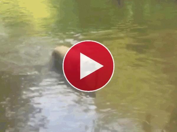 Mira a este perro jugando con el palo