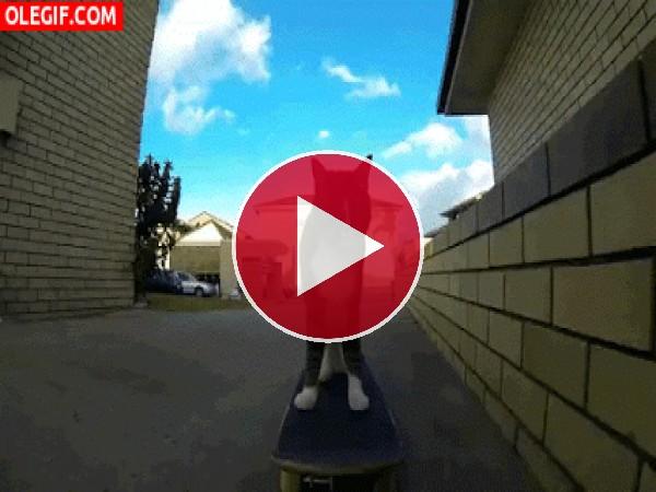 GIF: Un gato skater