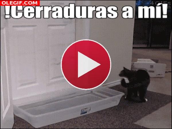 Mira a este gato abriendo la puerta
