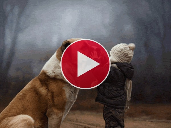 GIF: Amor a los animales