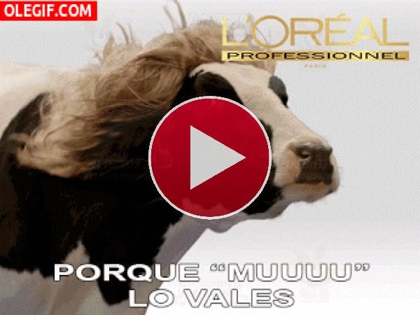 GIF: Esta vaca utiliza productos L'Oréal