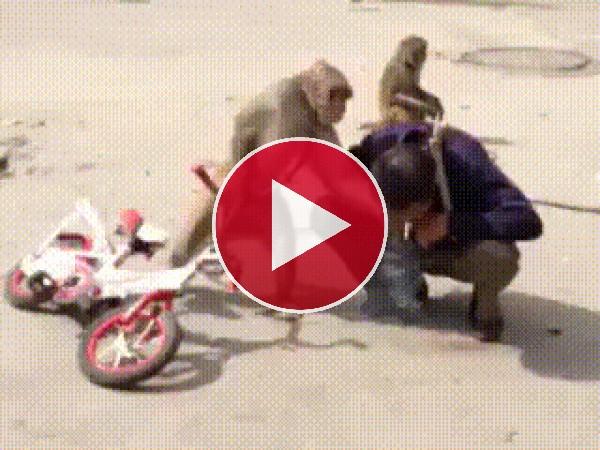 GIF: Este mono tiene mal genio